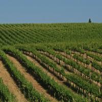 Sensi, Campoluce Chianti DOCG - Organic - Kingsland Wines