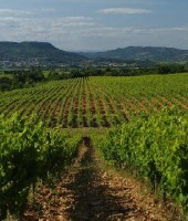 Image of Domaine Duseigneur